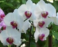 ARRIVAGE D'ORCHIDEE CHAQUE SEMAINE