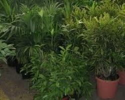 ARRIVAGE PLANTES VERTES INTERIEUR