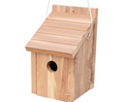 Accessoires oiseaux