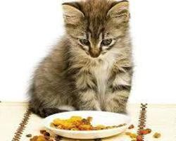 Alimentation chats