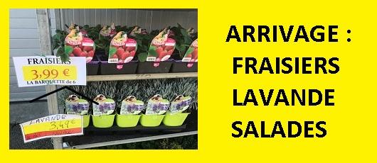 ARRIVAGE FRAISIERS , LAVANDES , SALADES,CHOUX, Plants Aromatiques