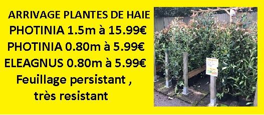 ARRIVAGE PLANTES DE HAIE