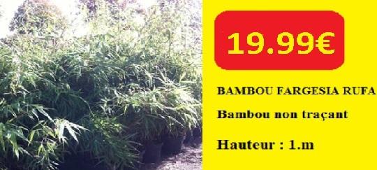 ARRIVAGE BAMBOU FARGESIA RUFFA