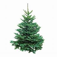 COMMANDER VOTRE SAPIN EN CLICK AND COLLECT
